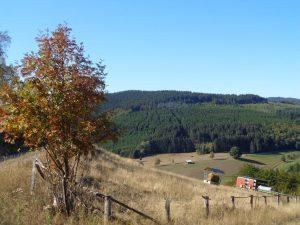 Vom Waldsterben ist noch nicht allzu viel zu sehen. – Foto: Dieter Warnick
