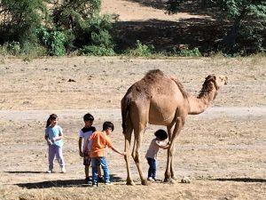 Die weite, leer geräumte Fläche nutzen Kinder zum Spielen mit einem Kamel.