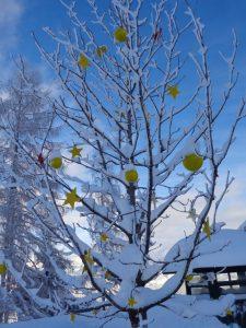 """Der Winter treibt oft ungeahnte """"Blüten"""". – Foto: Dieter Warnick"""