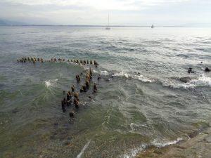 Nach dem Plattensee (594 km²) und dem Genfer See (580 km²) ist der Bodensee mit 536 km² der größte Binnensee Mitteleuropas; bezogen auf sein Wasservolumen sogar der Zweitgrößte. – Foto: Dieter Warnick