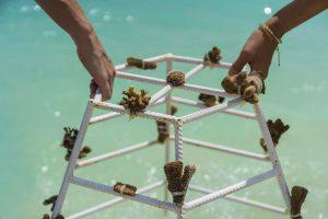 Quf der kleinen Barfuß-Luxusinsel Milaidhoo Island Maldives haben Gäste die Möglichkeit, vor Ort einen Korallenkorb zu pflanzen. – Foto: Milaidhoo Island / Maldives.jpg