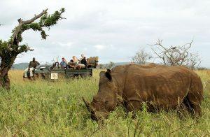 Thanda Safari: Ein besonderes Highlight für Tierliebhaber ist die Möglichkeit zu Fuß an Rhino Trackings im Busch mit einem Guide teilzunehmen. Foto: Christian Sperka / Thanda Safari