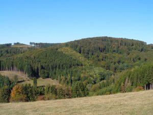 Im Rothaargebirge sind die Wälder noch größtenteils in Ordnung – Foto: Dieter Warnick