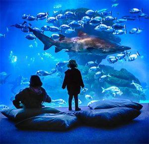 Das Palma Aquarium bietet besonders den kleinen Besuchern, die Möglichkeit zu entdecken, welche Pflanzen und Tiere im Mittelmeer leben. – Foto: Carlos Ramon Bonilla