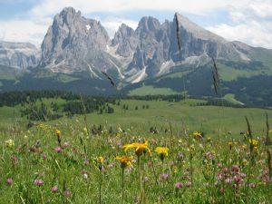 Die Seiser Alm ist ein fast baumloses, welliges Hochland mit schier endlos blühenden Almwiesen. - Foto: Hotel Cavallino Bianco