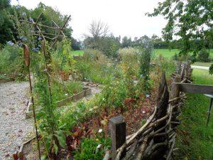 Auf dem Wieshof werden historische Gemüse und längst vergessene Pflanzen angebaut. – Foto: Dieter Warnick