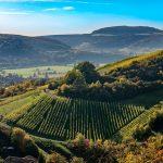 An den sanften Hängen des Saaletals hat der Weinbau eine lange Tradition. Seit 777 werden in Hammelburg Reben angebaut und edle Weine produziert. Hammelburg ist als die älteste Weinstadt Frankens bekannt und wurde urkundlich erstmals im Jahr 716 erwähnt; damit gehört sie zu den 30 ältesten Städten Deutschlands. – Foto: Alex Preyer