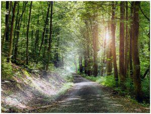 Unweit von Bad Kissingen – im Kaskadental – findet der Wanderer eine friedliche Ruhe vor. – Foto: Bayer. Staatsbad Bad Kissingen – Dominik Marx