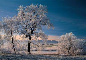 Raureif am Morgen: Themenwege durchziehen Murnaus Zuckerguss-Landschaft. - Foto: Tourist Information Murnau